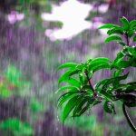 雨天行禅你会来吗?